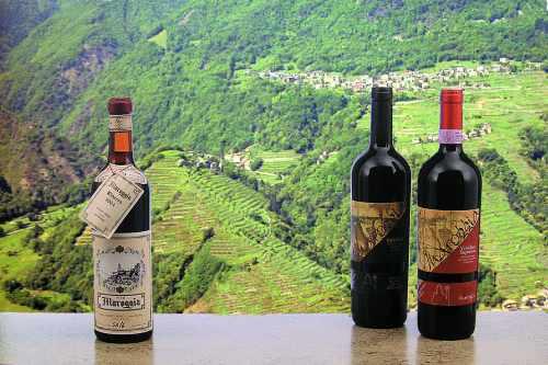 vinomaroggia_g