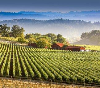 ナパ・バレーワインの特徴とは
