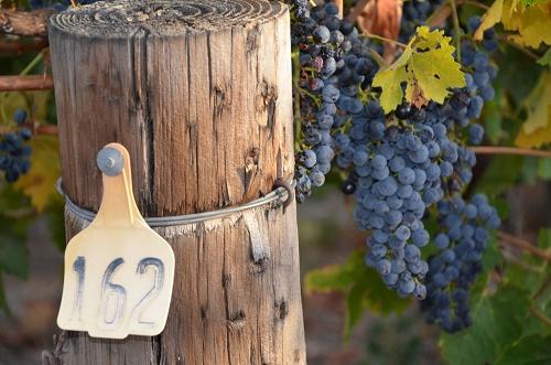 pic-vineyard-vine-post