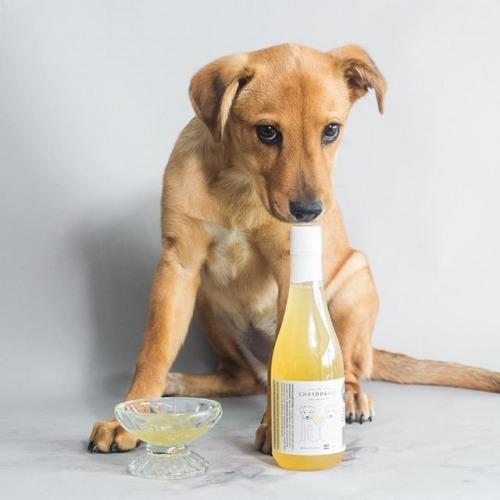 dog-wine