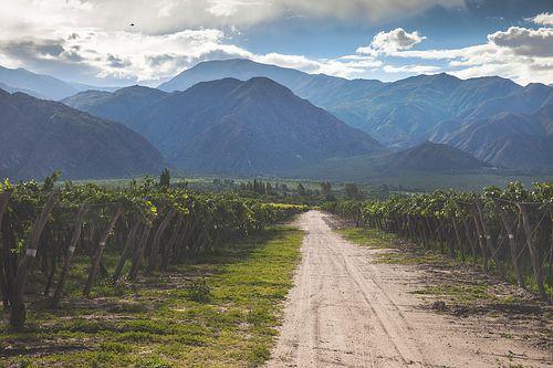 'Vino Country', Argentina, Salta Province, Cafayate