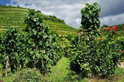 Vineyard Hermitage