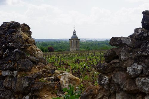 "View of the vineyard of Domain Huet, one of the premier vineyards of Vouvray.  The ""tower"" in the background is actually the steeple of a church.  The edge of the ancient vineyard ends in a high wall."