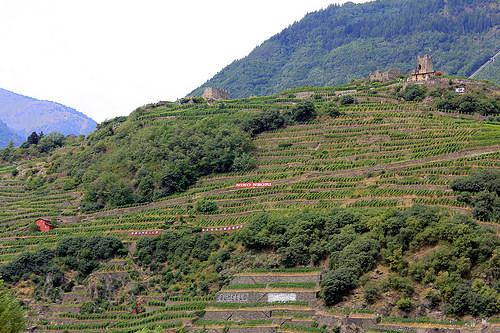 Valtellina wine country
