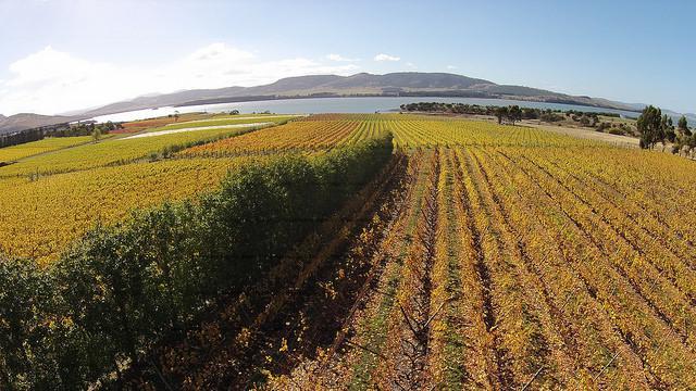 Riversdale Estate Vineyard - vineyard panorama