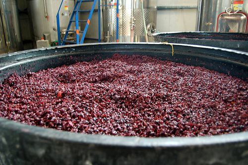 Red Wine Fermenting
