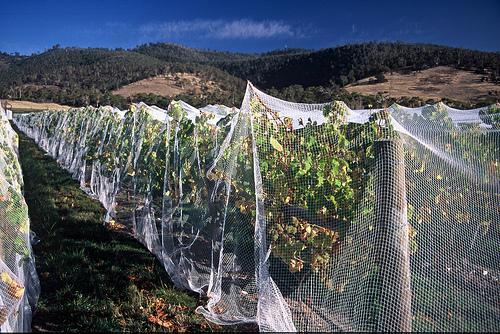 Stefano Lubiana Wines Tasmania Granton Vineyard