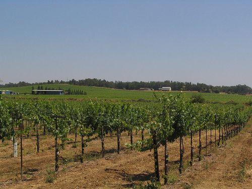 Vineyard South of Sacramento, California