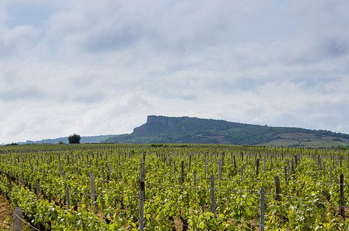 Vignobles bourguignons