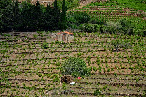 Barraca, Terroir de Banyuls Collioure, Roussillon, France.