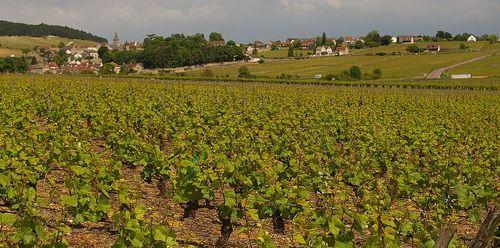 Burgundy2008 373