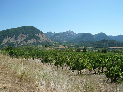Vineyards in the region of  Ch?tillon en Diois