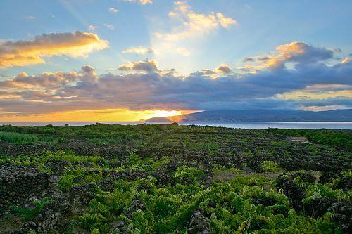 Vineyard Sunset, Criacao Velha, Pico