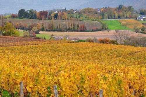 Paysage d'automne ~ Fall landscape