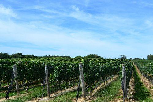 Northfork Vineyards