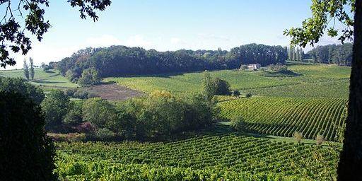 Vignoble de l'AOC Saussignac dans le Bergeracois
