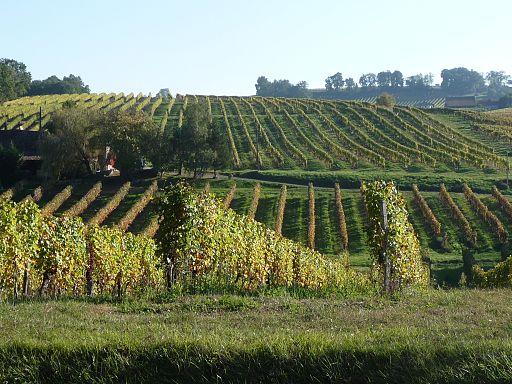 Vignoble de l'AOC c?tes-de-montravel dans le Bergeracois